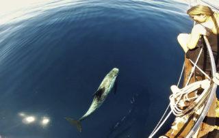 avistamiento cetaceos